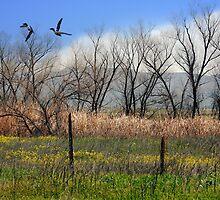 San Jacinto Wildlife Preserve by CarolM