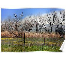 San Jacinto Wildlife Preserve Poster