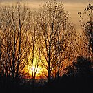 Sunset in the woods by Leon Heyns