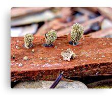 Unidentified Fungus Macro Canvas Print