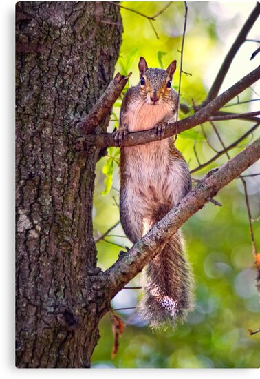 Curious Squirrel by stephaniellen