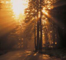 Sunbeams by Carol and Mike Werner