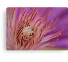 Close-up Clematis Canvas Print