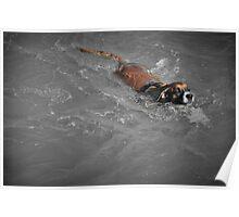Swimmer (SC) Poster