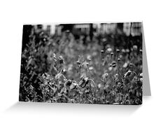 Clifden Poppies Greeting Card
