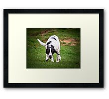 Well Spotted Framed Print