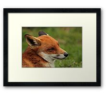 Fantastic Fox Framed Print