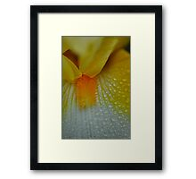 Yellow Flower raindrops abstract 2 Framed Print