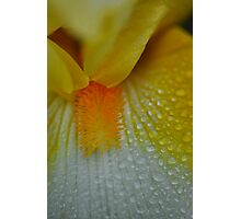 Yellow Flower raindrops abstract 2 Photographic Print