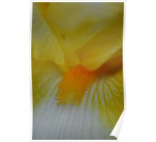 Soft focus flower yellow 1 Poster