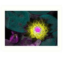 Waterlily Study Art Print