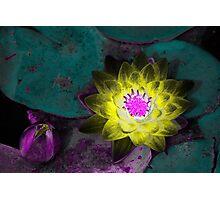 Waterlily Study Photographic Print