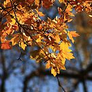 Autumnal by anca-m