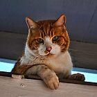 Beware of Cat by Saija  Lehtonen