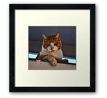 Beware of Cat Framed Print