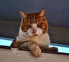 Beware of Cat Photographic Print