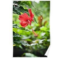 Island Flower Poster