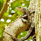 Iguana Be in Pictures-2 by ScaredylionFoto