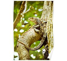 Iguana Be in Pictures-2 Poster