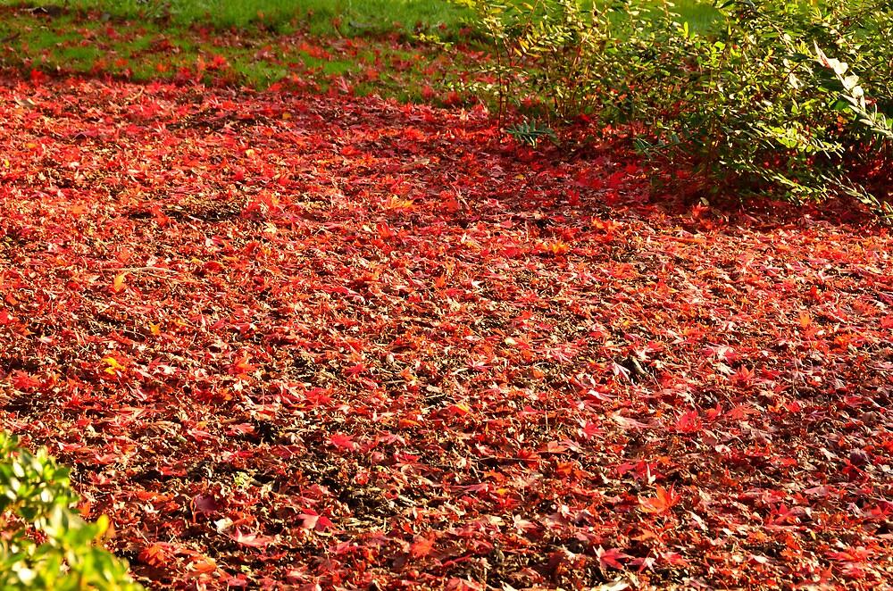Red Carpet by Steve