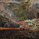 AUTUMN - THE OLD QUARRY. by AndyReeve