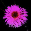 Fantasy Flower by ckredman031762