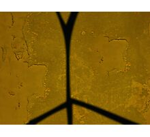 Yellow Wall With Shadow  Photographic Print