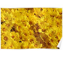 Bees in a Sea of Mums Poster