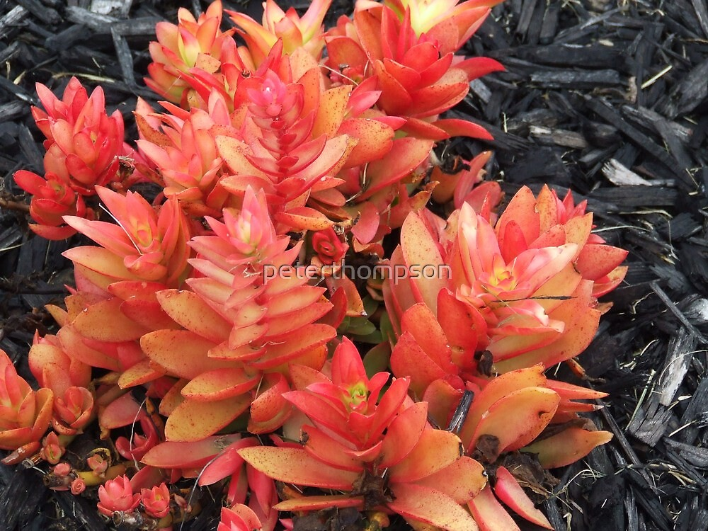 Erins flower by peterthompson