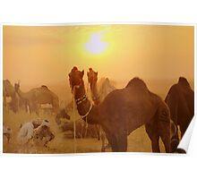 2011 Pushkar Camel Fair Poster