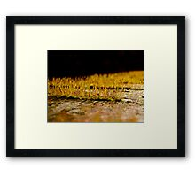 So Small, So Beautiful Framed Print