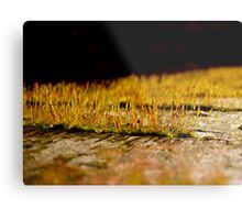 So Small, So Beautiful Metal Print