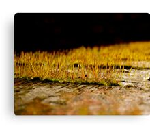 So Small, So Beautiful Canvas Print
