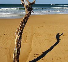 Coastline at Jan Juc by Darren Stones
