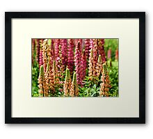 Summer....Autumn....Winter....Spring! Framed Print