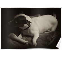 Macey posing dark with bone on pillow 1 Poster