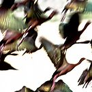 Chaotic Color and Beauty - ibis by Robbie Knight