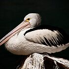 Pelican - the Night Watchman by wearehouse