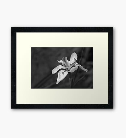 Orchid In Drops Framed Print