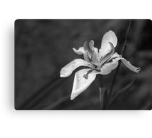 Orchid In Drops Canvas Print