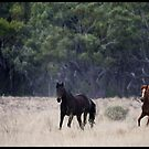 Horses & Their Riders  by Anna Ryan