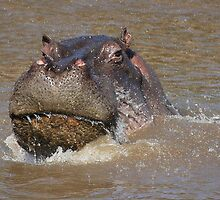 Splish, Splash, I was Taking a Bath by Jill Fisher