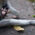 Baby Balinese Macaque by DanielTMiller