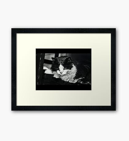 Portrait of a Stray Cat #1 Framed Print
