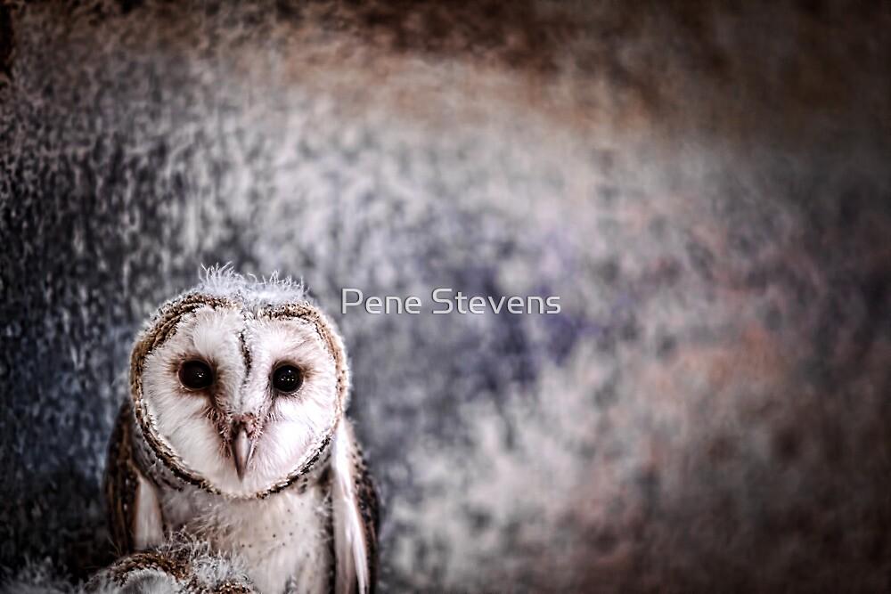 Boo... Who?  by Pene Stevens