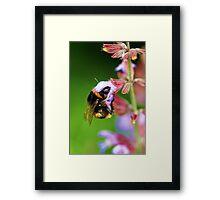 For The Love Of Nectar.... Framed Print