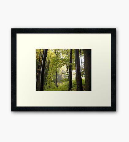 Autumn in Vienna forest Framed Print