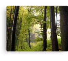 Autumn in Vienna forest Canvas Print
