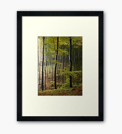 Autumn in Vienna forest. II Framed Print