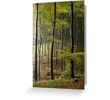 Autumn in Vienna forest. II Greeting Card